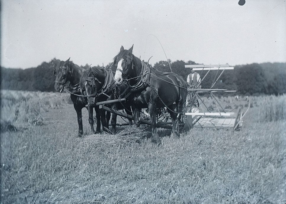 Farming around 1900 (Wikimedia Commons)
